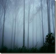 foggy morning in nandi hills banglore