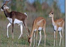 Mahavir Harina Vanasthali National Park in Hyderabad